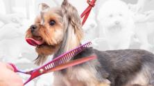 Teachlr.com - Peluquería Canina en Casa. Hazlo tú mismo.