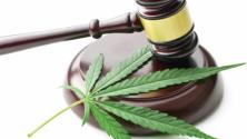 Teachlr.com - Cambios legales en la industria del cannabis