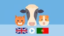 Teachlr.com - ANIMALS   Portuguese for Beginners - Course 3
