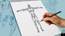 Teachlr.com - How to draw ANATOMY